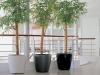 S6 3 Class Bambus